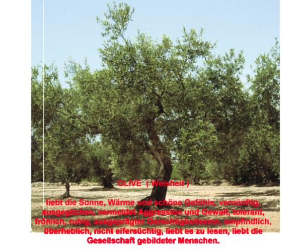 gefühle der bäume